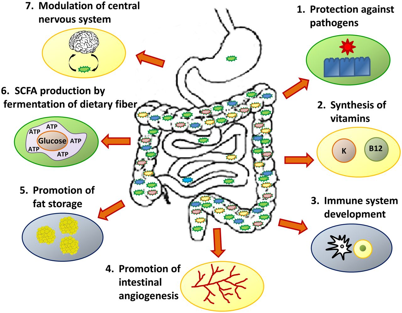 Image result for MICROBIOME picture