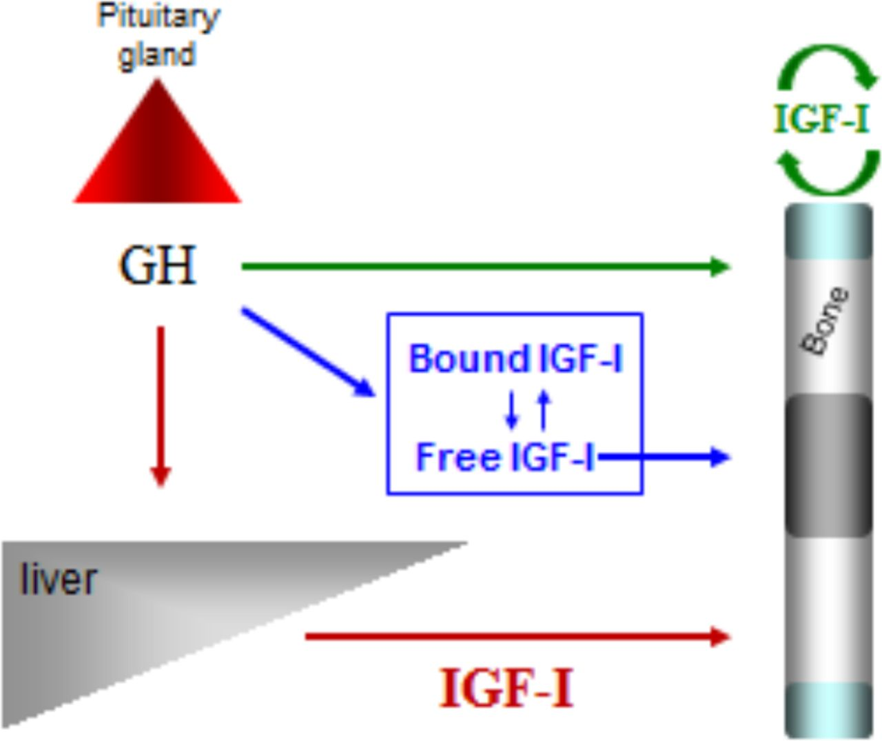 How To Interpret IGF-1 And Growth Hormone Stimulation